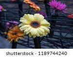 autumn outdoor floral...   Shutterstock . vector #1189744240