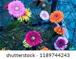 autumn outdoor floral...   Shutterstock . vector #1189744243