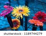 autumn outdoor floral...   Shutterstock . vector #1189744279