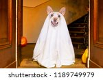 dog sitting as a ghost for...   Shutterstock . vector #1189749979