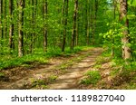 forest trees. nature green wood ... | Shutterstock . vector #1189827040