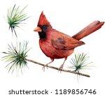 watercolor bird cardinal. hand...   Shutterstock . vector #1189856746