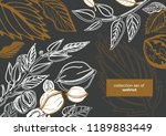 isolated vector set of walnuts... | Shutterstock .eps vector #1189883449