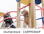 potrait of happy cocker spaniel ... | Shutterstock . vector #1189903669