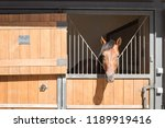 horse in a stable locked