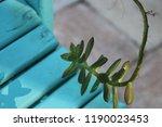 succulent plants in patio... | Shutterstock . vector #1190023453