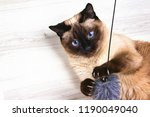 Stock photo siamese cat playing with a mouse on the wooden background 1190049040