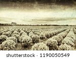agriculture on land reclaimed... | Shutterstock . vector #1190050549