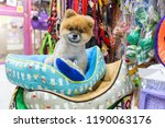 Stock photo pomeranian dog sitting on the bed in pet store 1190063176