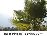 background mountains and palm... | Shutterstock . vector #1190089879