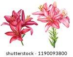 Beautiful Lilies  Two Elegant...