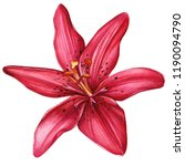 beautiful lily  red flower on...   Shutterstock . vector #1190094790