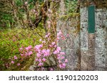 side walkway with flower and... | Shutterstock . vector #1190120203