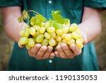 winemaker holding in hands the...   Shutterstock . vector #1190135053