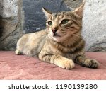 portrait of a tabby cat lying... | Shutterstock . vector #1190139280