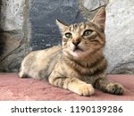 tabby cat lying down in the... | Shutterstock . vector #1190139286