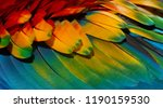 close up colorful of scarlet... | Shutterstock . vector #1190159530