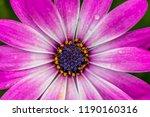 flower close up.floral... | Shutterstock . vector #1190160316