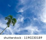 palm tree with blue sky and...   Shutterstock . vector #1190230189