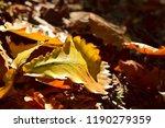autumn oak leaf on the ground....   Shutterstock . vector #1190279359