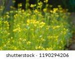 field flowers on a meadow... | Shutterstock . vector #1190294206