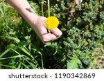 works in the garden. weeding... | Shutterstock . vector #1190342869