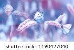 Beautiful Butterflies In The...