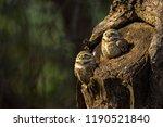 Stock photo owl on the tree 1190521840