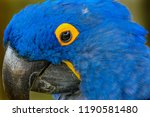 Blue Yellow Feathers Blue...