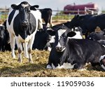 cows in the yard | Shutterstock . vector #119059036