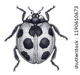 ladybug tattoo art. ladybird... | Shutterstock . vector #1190610673