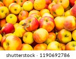 fresh and juicy citrus fruits... | Shutterstock . vector #1190692786