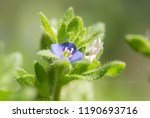 a macro picture of a tiny blue... | Shutterstock . vector #1190693716