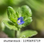 a macro picture of a tiny blue... | Shutterstock . vector #1190693719