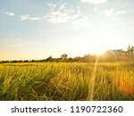 view of rice paddy field in the ... | Shutterstock . vector #1190722360