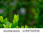 top of green leaf with blur... | Shutterstock . vector #1190732920