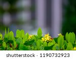 top of green leaf with blur... | Shutterstock . vector #1190732923