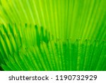 green leaf closeup background | Shutterstock . vector #1190732929