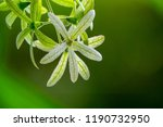 green flower with blur greenery ... | Shutterstock . vector #1190732950