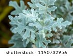 white leaf flower with blur... | Shutterstock . vector #1190732956