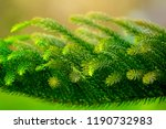 closeup pine tree leaf... | Shutterstock . vector #1190732983