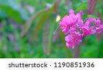 flower chain of love  creeper... | Shutterstock . vector #1190851936