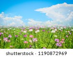 Flower Field Blue Sky...