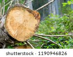felled tree in the national... | Shutterstock . vector #1190946826