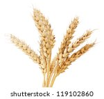 brunch of wheat ears over white | Shutterstock . vector #119102860