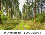 beautiful forest landscape at... | Shutterstock . vector #1191036916
