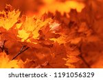 red leaves on trees in the... | Shutterstock . vector #1191056329