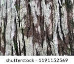 old wood tree texture background | Shutterstock . vector #1191152569