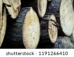 felled trees in a forest close ... | Shutterstock . vector #1191266410