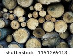 felled trees in a forest close... | Shutterstock . vector #1191266413